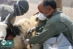 بیش از 788 هزار نوبت راس دام در ماکو واکسینه شدند