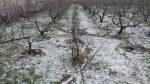 تگرگ ۲۷ میلیارد ریال به اراضی کشاورزی شوط خسارت زد