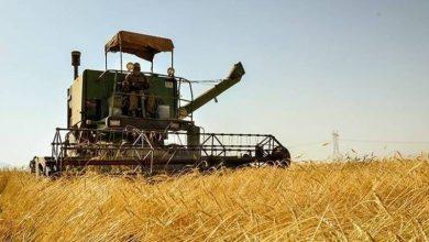 امسال ۱۵هزار تن گندم مازاد در شوط خریداری می شود